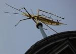c3ce7-grasshopperroyalexchange