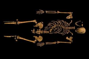 The skeleton of Richard III, recently discovered in a car park in Leicester