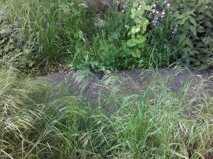 Overgrown grave, churchyard